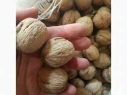 Продам грецкий орех оптом - фото 2