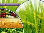 Proizvajalec in dobavitelj pesticidov po vsem svetu - photo 1