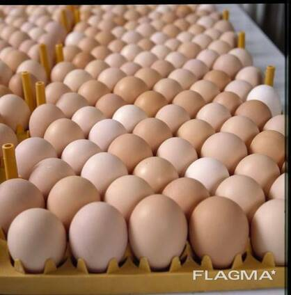 Top quality eggs for sale